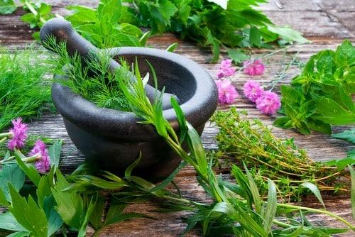 médecine plantes